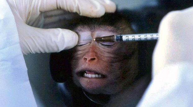 Nederland voor Europese rechter om dierproeven