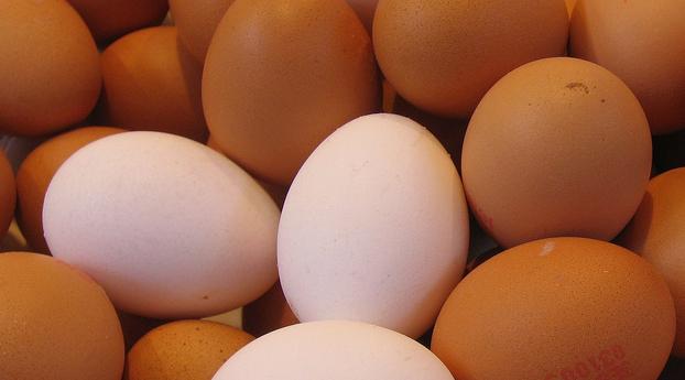 30.000 euro boete voor eierfraude